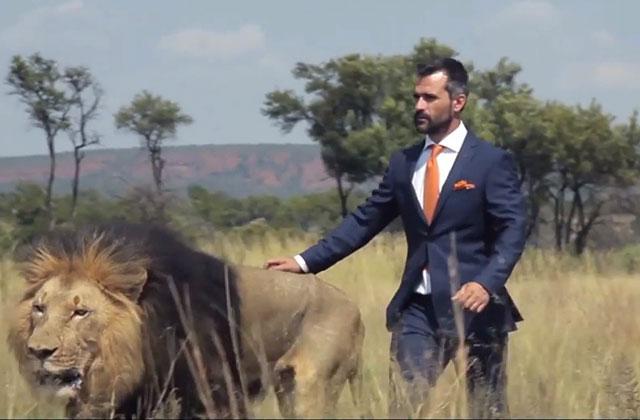 Des lions jouent au foot avec un zoologiste