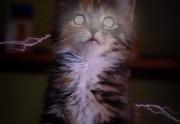 Lien permanent vers Les X-Kittens, ou quand les chatons aussi ont des super-pouvoirs