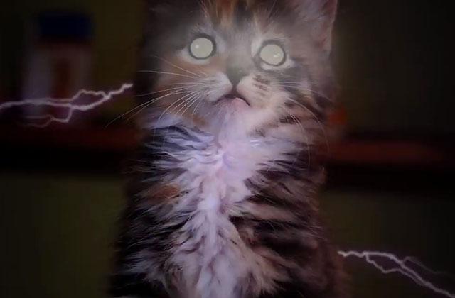 Les X-Kittens, ou quand les chatons aussi ont des super-pouvoirs