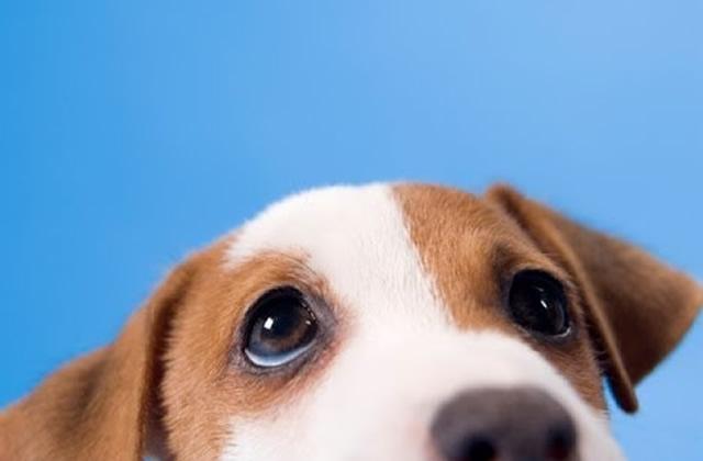 5 choses à savoir sur les chiens