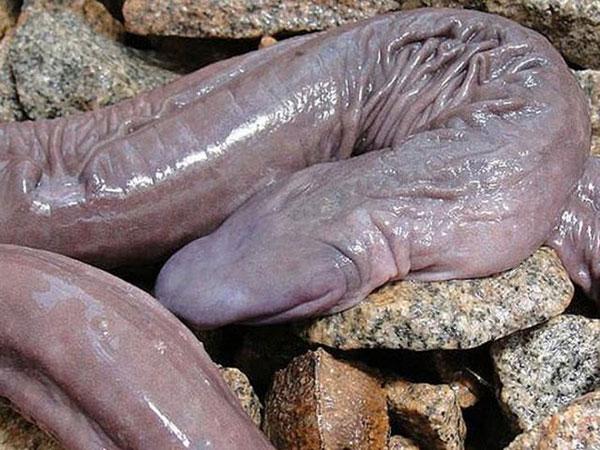 Animaux inspirant ou manifestant de la tendresse Animaux-phalliques-serpent
