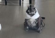 Lien permanent vers BaneCat le chat flippant est de retour