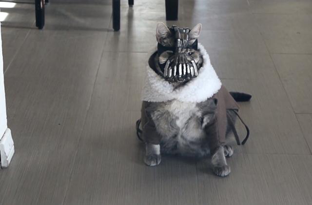 BaneCat le chat flippant est de retour