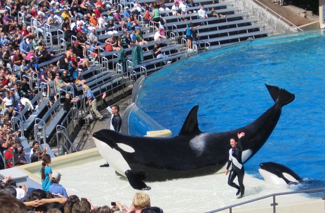 blackfish seaworld orque