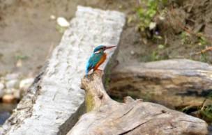 Lien permanent vers Le parc national de Bardia — Carte postale du Népal