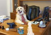Lien permanent vers Pourquoi il faut ramener son chien au travail