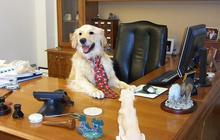 Pourquoi il faut ramener son chien au travail