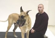 Lien permanent vers Comment les chiens réagissent-ils à l'aboiement humain ?