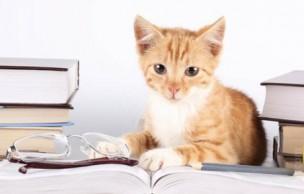 Lien permanent vers Les fans de chats sont les plus intelligents, c'est prouvé !