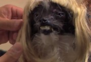 Lien permanent vers Jimmy Kimmel relooke le « chien le plus laid du monde »