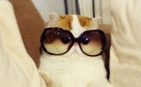 Les tendances lunettes de soleil de l'été 2014