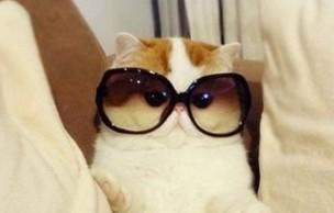 Lien permanent vers Les tendances lunettes de soleil de l'été 2014