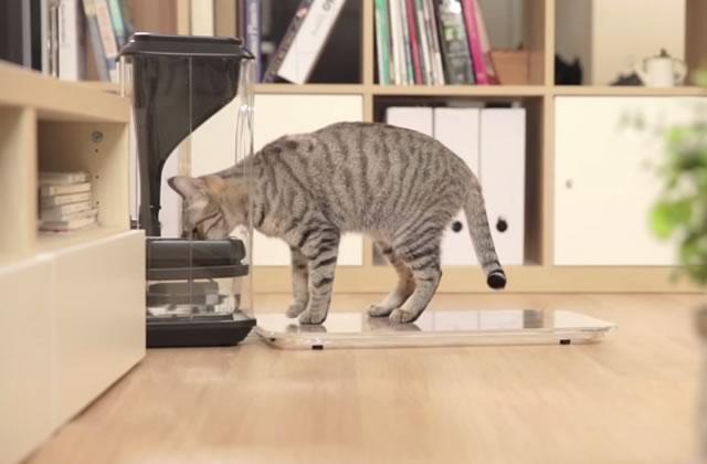 Bistro Smart Cat Feeder, la gamelle à chats WTF (et probablement fausse)