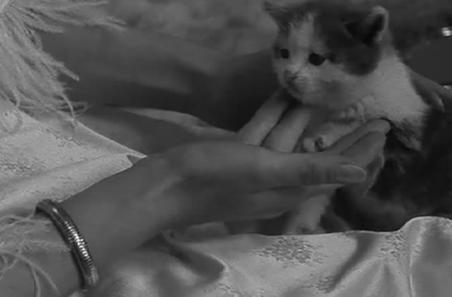 Les chats dans les films : le supercut