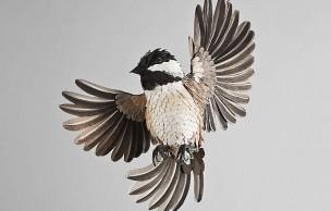 Lien permanent vers Les magnifiques oiseaux en papier de Diana Beltran Herrera