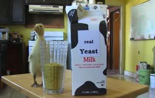 Lien permanent vers Du fromage vegan de synthèse : WTF ou révolution ?