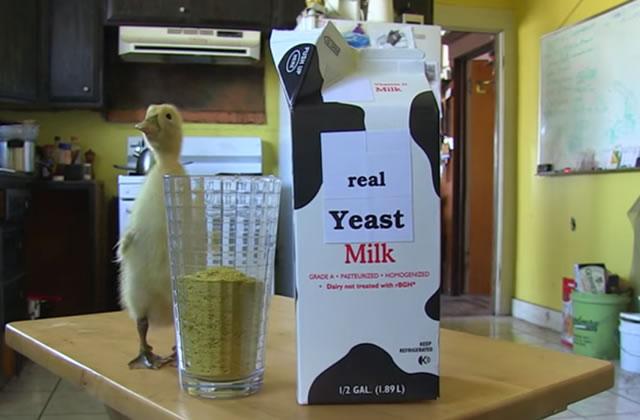 Du fromage vegan de synthèse : WTF ou révolution ?