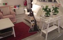 IKEA favorise l'adoption des chiens avec Home for Hope