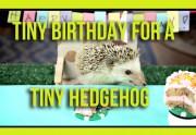 Lien permanent vers Un petit hérisson fait sa boum d'anniversaire