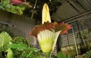 Lien permanent vers 3 plantes vraiment très étranges