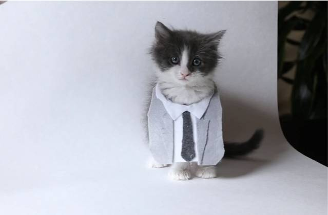 50 Shades of Grey  version chatons