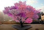 Lien permanent vers L'arbre aux 40 fruits de Sam Van Aken