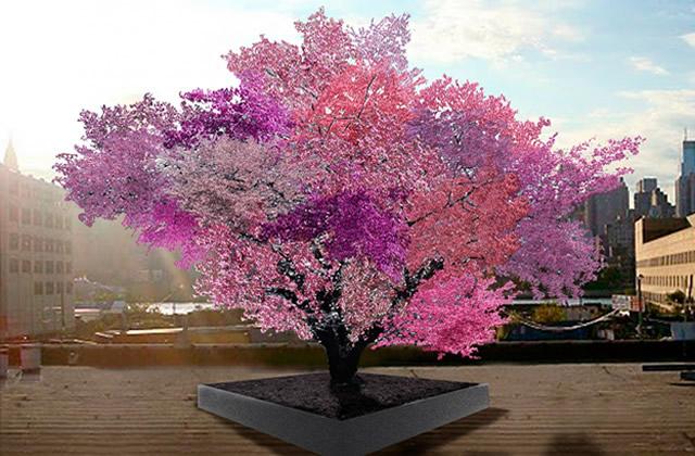 L'arbre aux 40 fruits de Sam Van Aken
