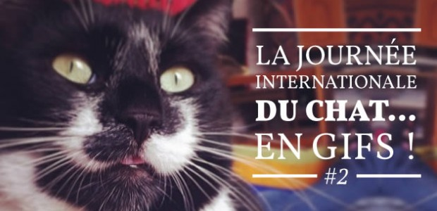 La Journée Internationale du Chat… en gifs ! #2