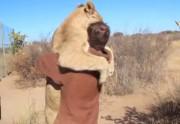 Lien permanent vers Le plus impressionnant des câlins d'animaux en vidéo