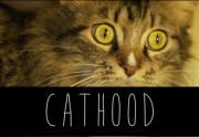 Lien permanent vers Cathood, la parodie de Boyhood version chatons