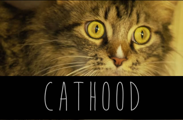 Cathood, la parodie de Boyhood version chatons