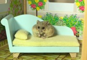 Lien permanent vers Un tout petit hamster dans une toute petite maison, le combo beaucoup trop chou