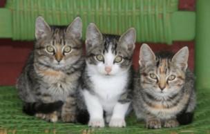Lien permanent vers Josée l'Obsédée et les trois p'tits chats
