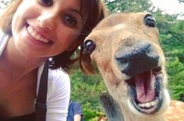 Les vidéos d'animaux de la semaine #90