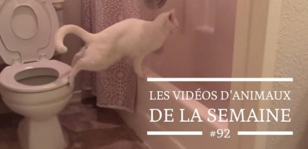 Les vidéos d'animaux de la semaine #92
