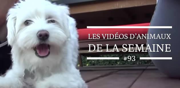 Les vidéos d'animaux de la semaine #93