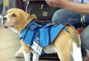 Lien permanent vers Le chien qui ramène les objets trouvés dans l'aéroport