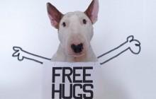 Jimmy Choo, le Bull Terrier top model du Web