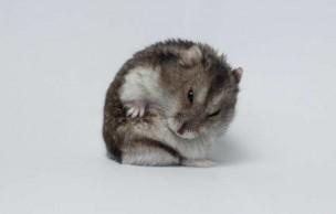 Lien permanent vers Comment dépasser la mort de son hamster grâce à… la philosophie