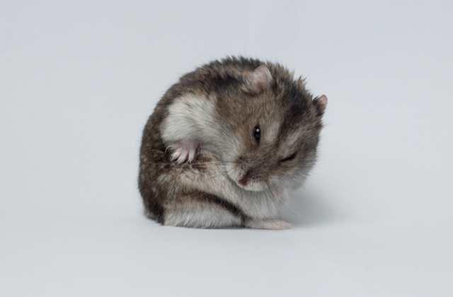 Comment dépasser la mort de son hamster grâce à… la philosophie