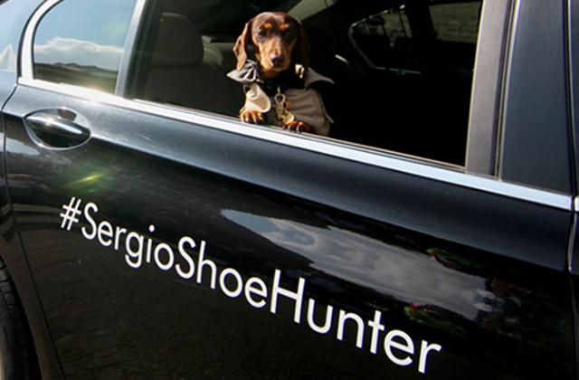Sergio, le chien photographe de la Fashion Week 2014 de Londres