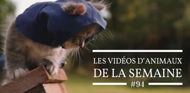 Les vidéo d'animaux de la semaine #94