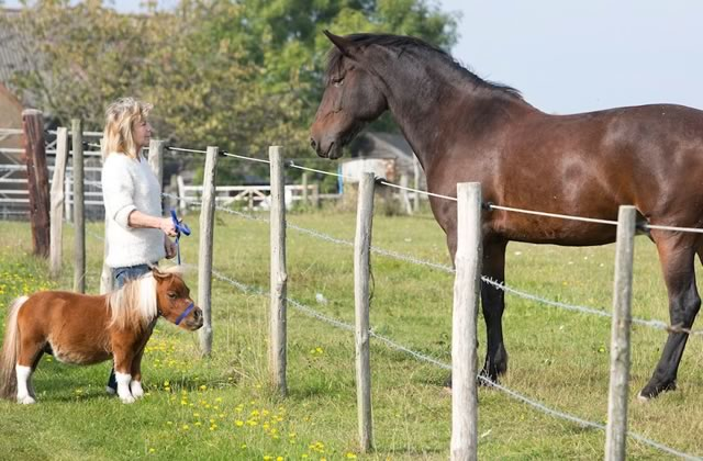 Le mini-cheval, le chien du futur