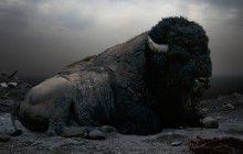 Des animaux en captivité replacés (en photos) dans leur environnement naturel
