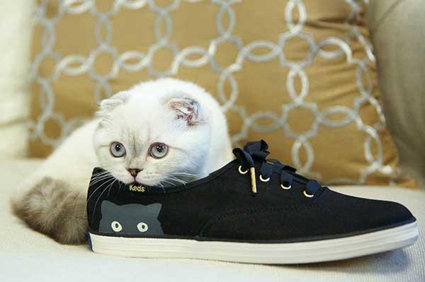 sneaky-cat-1