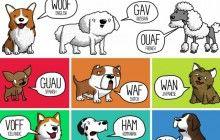 «Aïe », «prout » et autres bruits qui diffèrent selon les langues