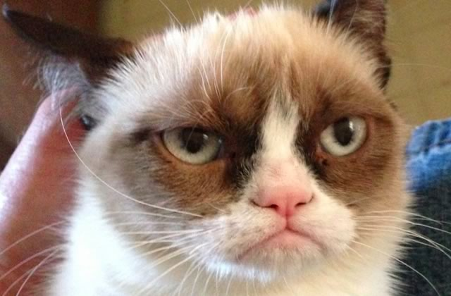 Grumpy Cat, le film, a son trailer