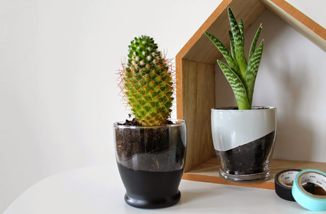 diy transformer un verre en pot pour de petites plantes. Black Bedroom Furniture Sets. Home Design Ideas