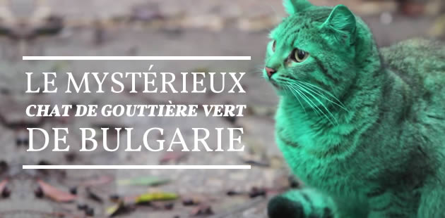 Le mystérieux chat de gouttière vert de Bulgarie