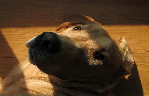 forum chien rencontre